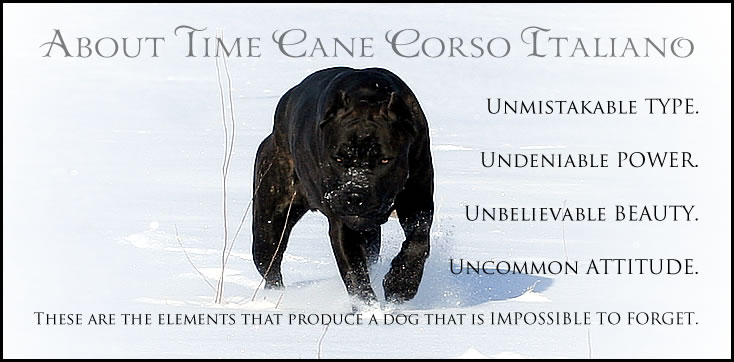 About Time Cane Corso Italiano - Breeder of Show, Working, Service, and Companion Dogs & Puppies